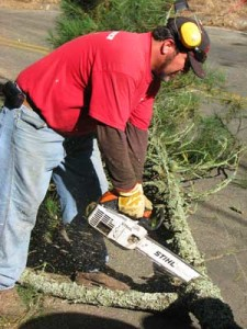 oakland tree service contractor